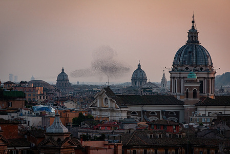 ROME - Flock of birds over Rome during sunset