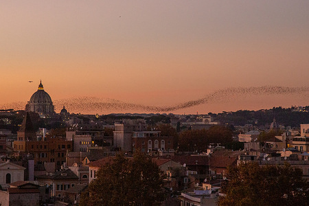 Starlings fly at sunset over the sky in Rome
