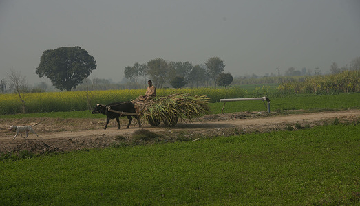 LAHORE,PUNJAB,PAKISTAN,JANUARY 25,2021= Pakistani villagers busy in their routine work during dense fog on a cold winter morning in subrub of Lahore on January 25, 2021. The intensity of the fog, visibility was reduced to zero, making it difficult for vehicles and people tomaneuveron the roads, the humidity levels must be more than 90 per cent, the air must be still and the sky clear.(Photo by Rana Sajid Hussain/Pacific Press Agency)