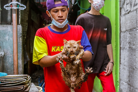 Saved cats are seen after the second alarm fire hits Muslim Community in Cubao, Quezon City on morning of January 30, 2021. Residents failed to rescue their pets due to a raging fire in Muslim Community. Estimated 5 cats are reported dead.