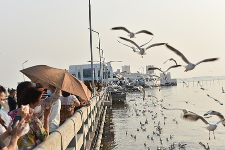 Tourists watch and feed seagulls at Bang Pu Recreation Center, Samut Prakan Province, where flocks of seagulls escape from the cold in early winter every year.